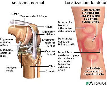 Estructura de la rodilla